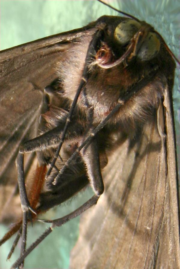 Mothc
